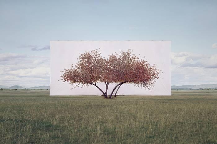 Myoung Ho Lee:一棵脱离荒诞现实的树