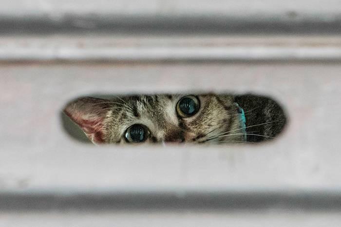 """荷兰摄影师移居香港 用镜头记录传统老店中的""""招财猫"""""""