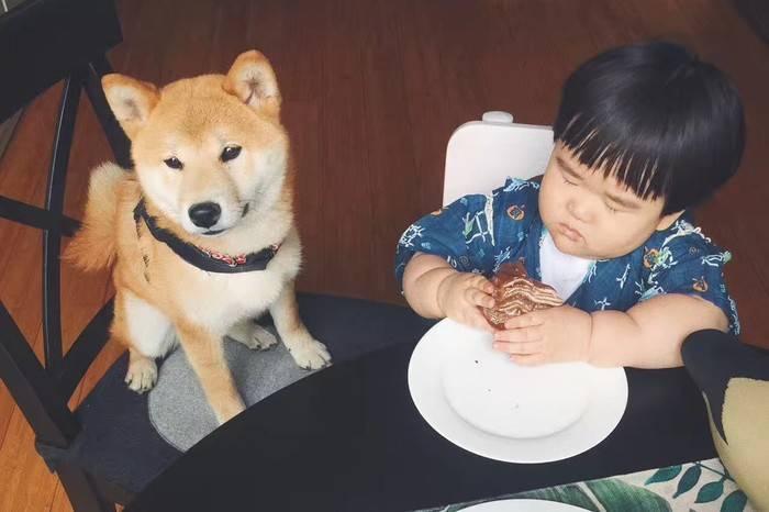 虽然狗狗不懂你的世界,但是它懂得有你在身旁就是全世界