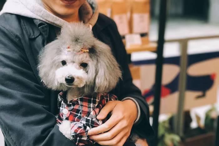 独家对话6位爱狗人士 与狗狗之间不能说的秘密