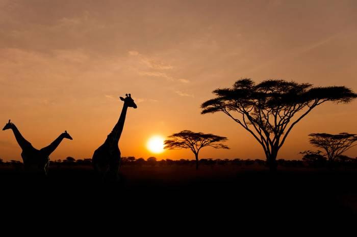 从奢华到原始,感受一场野性十足的肯尼亚之旅