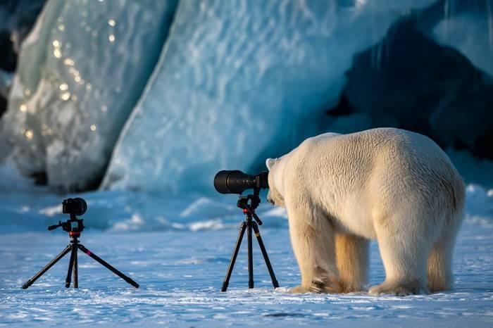 2018野生动物喜剧摄影大赛作品发布,一群被大自然耽误的奥斯卡影帝