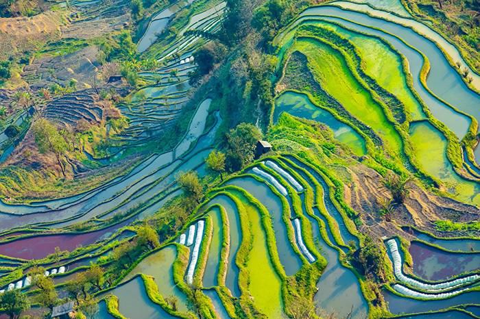 欣赏三个国家的稻田艺术,感受诗意的田园生活