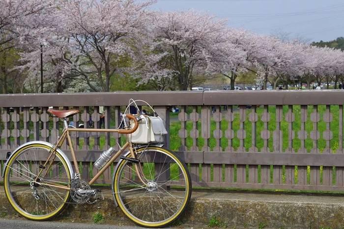 这些日本人骑车踏青的照片,让我仿佛过了一个假的春天