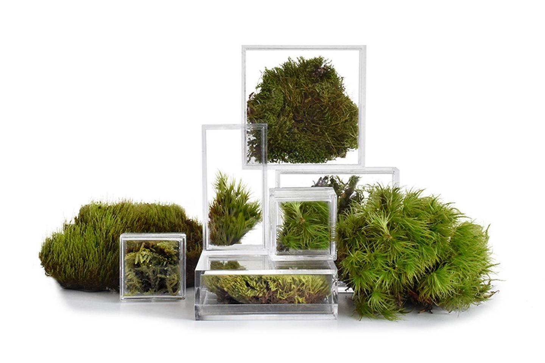 生活中缺一点绿?让这些微型玻璃容器提供帮助