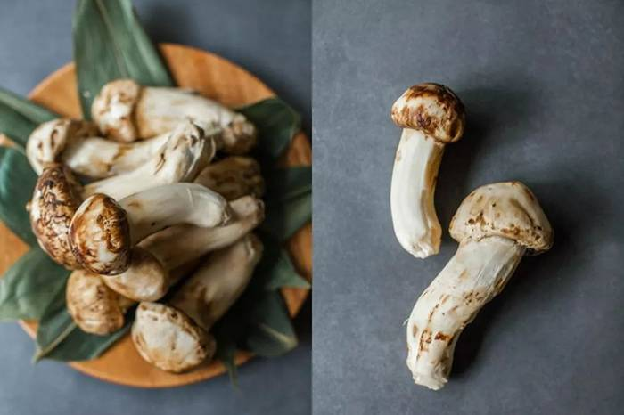 松茸怎么吃,两道家庭料理带你享受高级的野趣