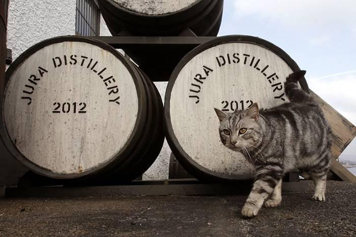 威士忌与猫原来有这么千丝万缕的联系?