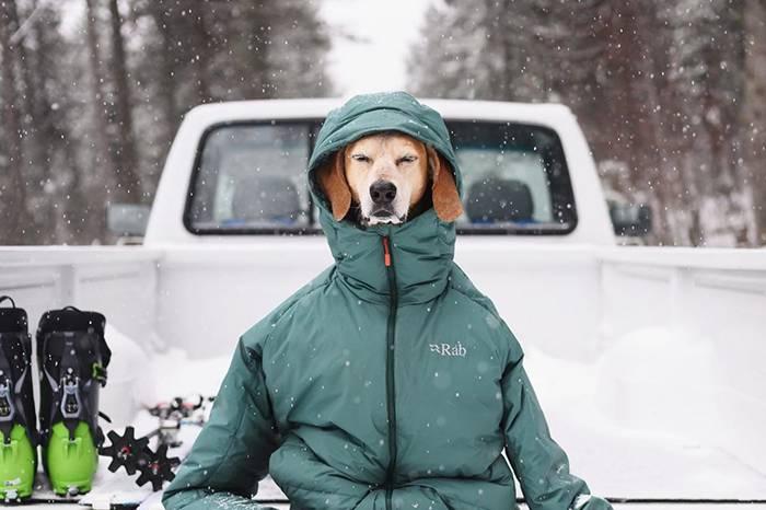 做一只130万粉丝的快乐户外露营狗,前提它真的是条狗