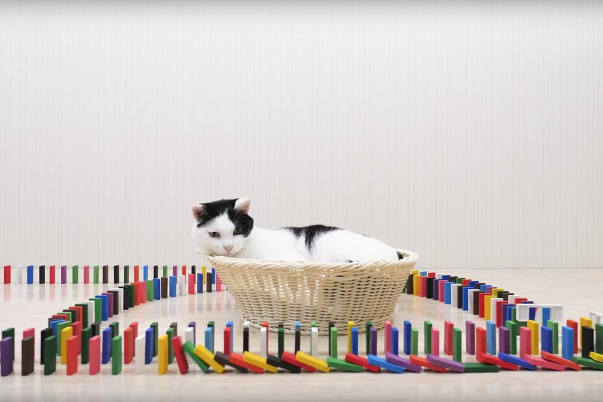 猫咪与多米诺,想吃猫粮没那么容易
