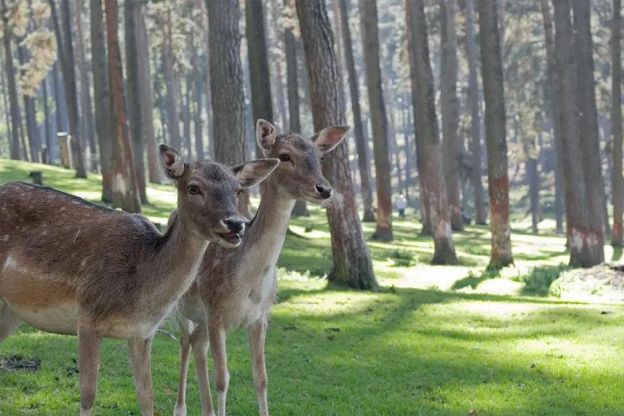 去亚洲最大的城中草原,寻找鹿的故乡