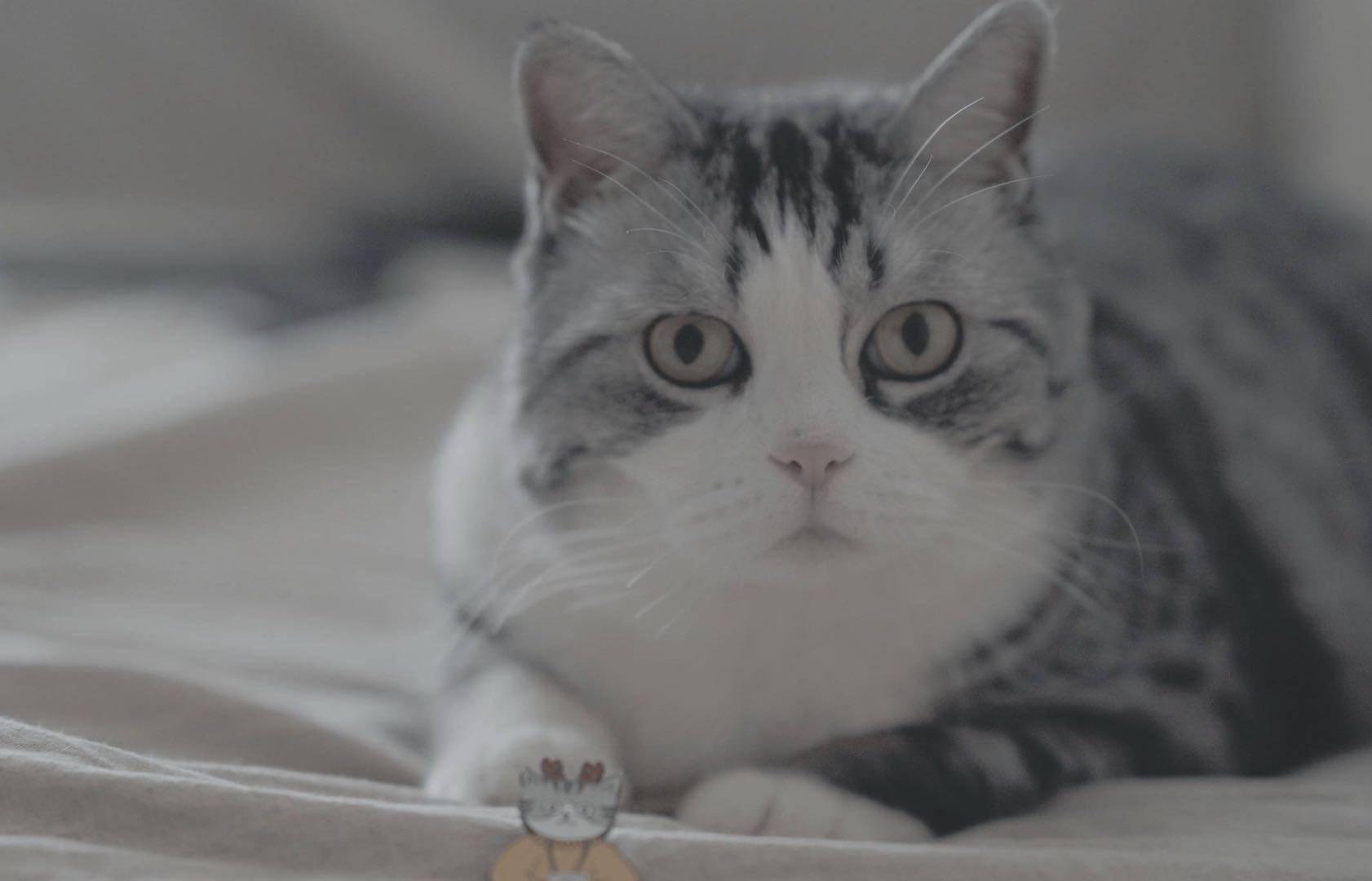 我是猫:猫猫自白 A Cat's Vlog