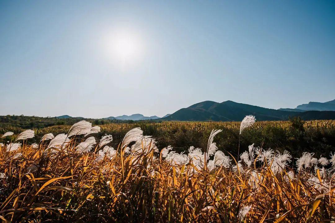 距离北京最近最安全的千亩自然露营地在哪里?